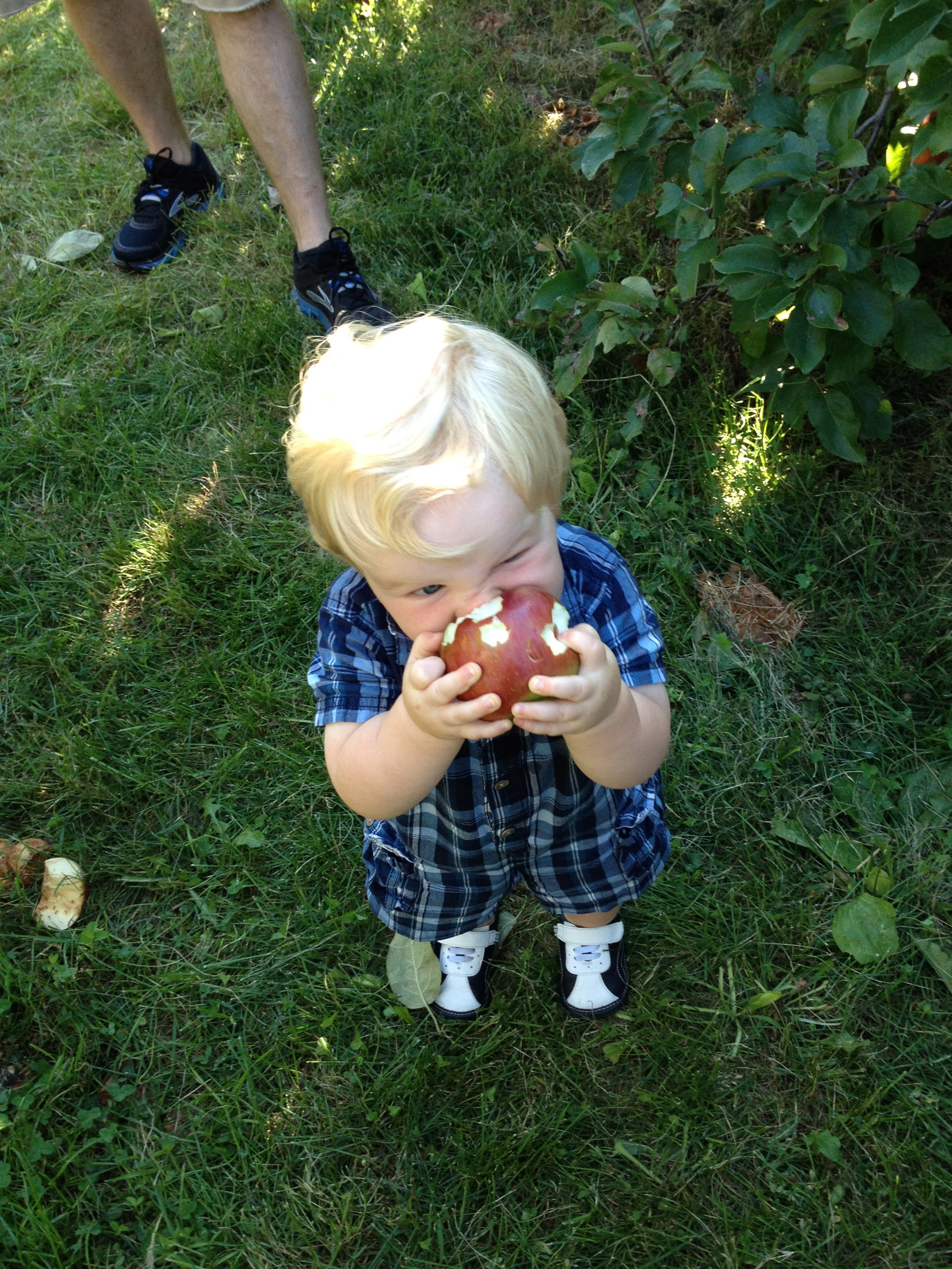 Baby Eating Apple During Apple Picking