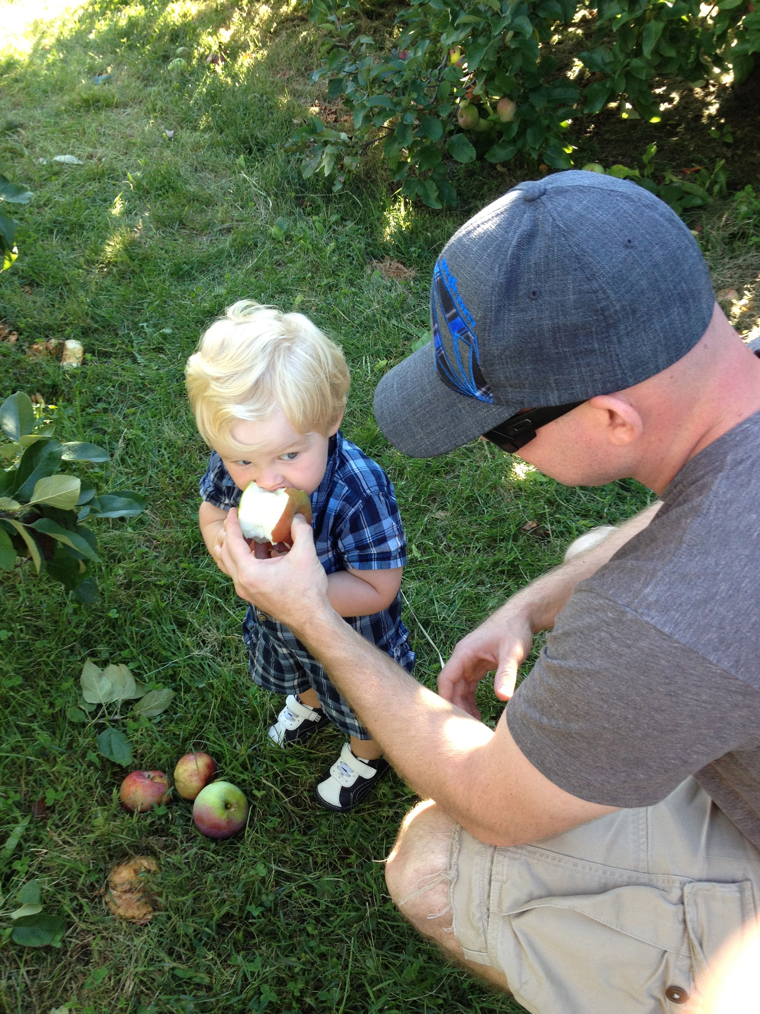 Dad Helping Toddler Eat Apple During Apple Picking