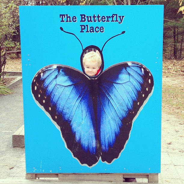 Toddler at Butterfly Place